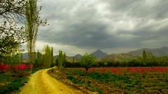 . (Vieparamsberlon.) Tags: garden spring trees mountains landscape path dirt road village texture hd hdr photo edit