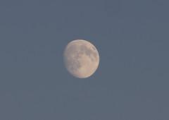 Moon (ArtGordon1) Tags: davegordon davidgordon daveartgordon davidagordon daveagordon artgordon1 london england uk summer walthamstow august 2016 moon themoon
