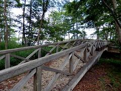 Bayard Cutting Fields Arboretum (28) (pensivelaw1) Tags: suffolkcounty newyorkstate longisland bayardcuttingarboretumstatepark
