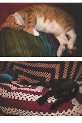 sleepy cats (ConcreteLies) Tags: cats kittens kitties pets animals sleeping couch blanket black pudgy