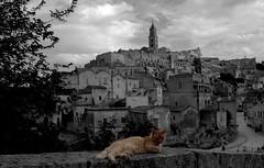 Il gatto di Matera (Luana_58) Tags: gatto matera bw