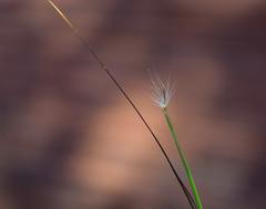 Too the very End. (Omygodtom) Tags: season macro macromonday tiny grass tamron90mm bokeh outdoors nikon nature natural park d7100 post tag flickr flower