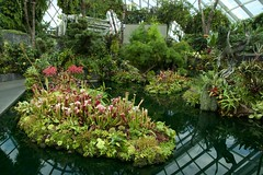 Pond with flowers in the Cloud Forest dome in the Gardens by the Bay in Singapore (UweBKK (α 77 on )) Tags: singapore singapur southeast asia sony alpha 77 dslr slt flowers pond green plants flora cloudforest dome gardensbythebay gardens bay