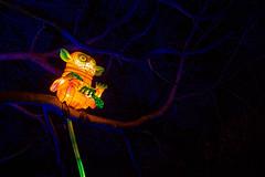 _MG_5597-HDR.jpg (Tibor Kovacs) Tags: lights festival tarongazoo vivid australia colors monkeys sydney night colours