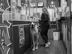 Big friend (Stephan Haecker) Tags: street photography buenos aires argentina dog black white blackandwhite monochrome animals walking pets perro mascota