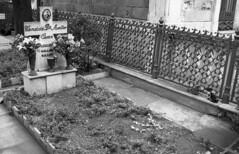 Nuova vita (michele.palombi) Tags: terra morte gatti spiritualit darkroom