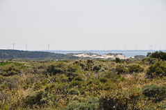 DSC_0116 (xpistian) Tags: dünen duinen dunes netherlands northsee niederlande nordsee noordzee windräder