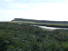 P1120039 (jrcollman) Tags: places plants pteridiumaquilinumbracken pplant europeincldgcanaries covehithe phragmitesaustralis britishisles suffolk