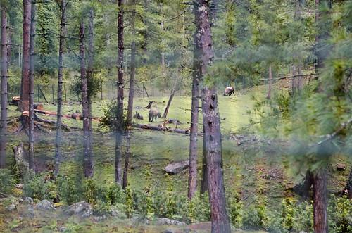 Motithan takin reserve
