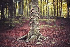 Arbol verdadero (Ibai Acevedo) Tags: tree love forest arbol hug arm amor places bosque abrazo brazo verdad