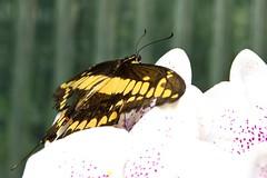 IMG_0549 (Lightcatcher66) Tags: florafauna makros blütenundpflanzen lightcatcher66