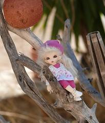 Visiting my parents (Jollie) Tags: doll driftwood tiny bjd resin dolly fairyland abjd ante balljointeddoll puki dimphy pukipuki