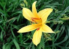 DSC00027-1 (German Galvez) Tags: flores flower color fleurs flora blossom sony awesome flor blossoms blumen bloom blomma colourful bunga fiori blommor bloemen blomster bulaklak kwiaty kwiat flori virgok kukkia flowerscolors floare ccolours dschx9v sonydschx9v