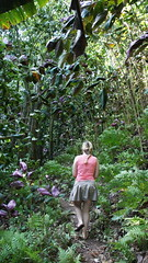 """A walk in the jungle of Tahiti • <a style=""""font-size:0.8em;"""" href=""""http://www.flickr.com/photos/87636534@N08/8197724585/"""" target=""""_blank"""">View on Flickr</a>"""