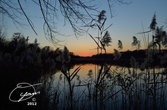 oyaMAM_20121117-172845s5 - The Glow Fades, Reeds Stand Supreme (MichaelAPMayo) Tags: nature photography oyamam oyamaleahcim