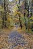Herbstallee 19.11.2012