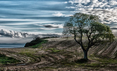 Majestic (C.M_Photography) Tags: blue trees ireland sea sky tree water beauty field clouds landscape scenery scenic tracks northernireland colourful