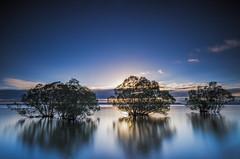 Wet Feet (Nick Twyford) Tags: longexposure blue trees newzealand water sunrise nikon wideangle nopeople nz northisland laketaupo tranquilscene kuratau colourimage leefilters 1024mm d7000 leebigstopper lee12gndsoft availableingettyimages