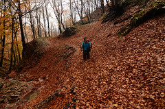 Un p di foglie... (supersky77) Tags: wood autumn fall leaves foglie forest leaf wald autunno lombardia beech bois bosco foresta lombardy faggio buchen fagussylvatica cavargna faggeta lepontine alpilepontine valcavargna sentierodelle4valli