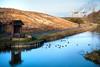 Wigg Island 5 (juliereynoldsphotography) Tags: reflections canal fiddlersferry wiggisland juliereynolds