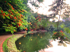 Back to My Old Tricks (osvaldoeaf) Tags: park flowers brazil lake tree green nature water floral brasil america landscape petals spring still south blossoms lagoon reflexions flamboyant goinia gois poinciana wonderfulworldofflowers