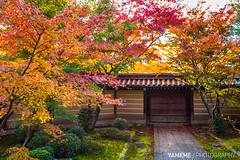 A Corner of Autumn / Kyoto, Japan (yameme) Tags: travel japan canon eos maple kyoto   kansai    eikando  24105mmlis 5d3 5dmarkiii