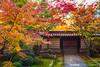 角落裡的秋天 A Corner of Autumn / Kyoto, Japan (yameme) Tags: travel japan canon eos maple kyoto 京都 日本 kansai 旅行 關西 楓葉 eikando 永觀堂 24105mmlis 5d3 5dmarkiii