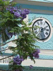 Camajuan's city hall clocktower. Reloj del ayuntamiento de Camajuan en 2007 (lezumbalaberenjena) Tags: clara blue tower azul watch cuba villa reloj flamboyant villas 2007 flamboyan camajuani camajuan