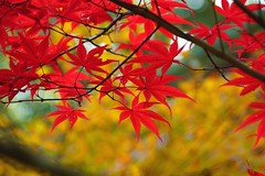 (nobuflickr) Tags: autumn nature japan kyoto autumncolors       nanzenjitemple  20121119dsc01703