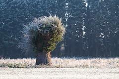 Frosty Tree Stump (Andy.Harper) Tags: wood winter cold tree field landscape frost stump
