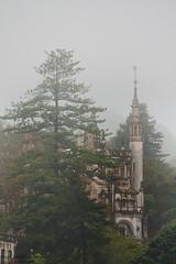 Entre nieblas (Di Gutti (diegogutierrez79@gmail.com)) Tags: house tree portugal fog arbol casa sintra quinta niebla gettyimages