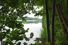 Am Ufer // At The Shore (frankbehrens) Tags: schaalsee mecklenburg biospherereserve biosphrenreservat
