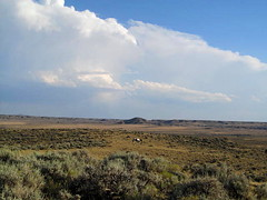 One lone Mustang (Hayseed52) Tags: vast open space mustang clouds nature west wyoming