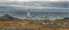 Follow Me (kevinmcnair) Tags: scotland fife elie elieandearlsferry firthofforth riverforth fifecoastalpath sailing sailboat boat sea fifebeaches rubycoast ladystower