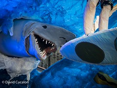 Festes de Gracia 2016 (David Cucalón) Tags: david cucalon festes de gracia festesdegracia tiburon shark blue azul city sentidodelhumor funny diversion barcelona