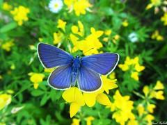 Butterfly 985 (+310000 views!) Tags: butterfly borboleta farfalla mariposa papillon schmetterling