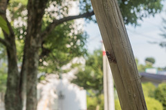 Cicada (odeleapple) Tags: nikon d810 af nikkor 50mm f18d cicada