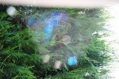 falscher Fokus (Hans-Jrgen Bckmann) Tags: fokus refektion spinnweben