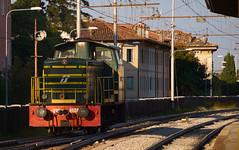 Little diesel (Skylark92) Tags: italy udine central station friuli diesel locomotive platform cnr d245 245 fs