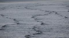 tide (Bernal Saborio G. (berkuspic)) Tags: tide wave sea ocean swell nature