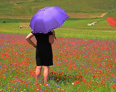 Donna tra i fiori - Woman among flowers (Ola55) Tags: ola55 italy umbria flowers fiori colours colori parconazionalemontisibillini estate summer poppies papaveri umbrella ombrello italians worldtrekker wonderworld