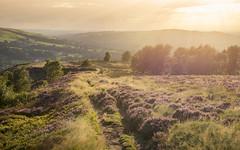 An August evening (Keartona) Tags: coombes walk summery summer path footpath grasses heather glow golden sunlight charlesworth derbyshire highpeak august countryside rural