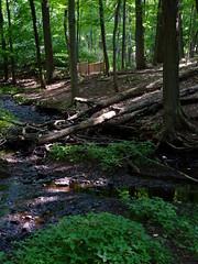 Stream junction along Buell Brook (Dendroica cerulea) Tags: buellbrook stream brook creek forest ravine bridge summer rutgersecologicalpreserve livingstoncampus rutgersuniversity middlesexcounty nj newjersey