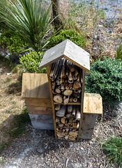 Someones Collection (Jocey K) Tags: pampasgrass newzealand christchurch box wood sticks plants crane cbd art greeningtherubble