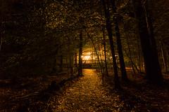 20160721-IMG_1823-Edit.jpg (Gary Phillips2010) Tags: pinewoods