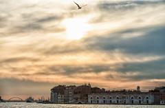 2016_Greece and Venice-9741-bewerkt.jpg (HummingbirdNL) Tags: 2016 italie venetie venice
