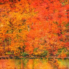 You Were Trying to Break Into Another World (Thomas Hawk) Tags: america autumn fall grantsfarm missouri stlouis usa unitedstates unitedstatesofamerica lake tree trees us fav10 fav25 fav50
