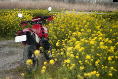 L1008442c (haru__q) Tags: leica m8 leitz summicron field mustard  honda crm250r motorcycle 2st