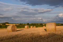 Early evening golds (sarah_presh) Tags: norfolk field bales hay harvest warmth gold sun sunny evening cloyds outside nikond750