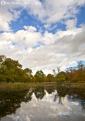 POOL REFLECTIONS. (Des Hawley. Over 1.7 million views !!) Tags: uk november autumn england nature pool clouds reflections pond nikon skies cheshire d300 altrincham coth supershot thegalaxy dunhammasseypark absolutelystunningscapes deshawley